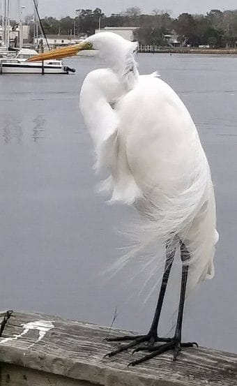 White egret on the windy harbor